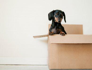 6 zaken om te onthouden wanneer je je huurwoning gaat verlaten